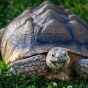 Стратегии «Черепаха» для бинарных опционов